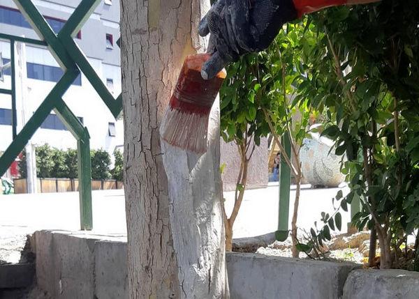 پیش گیری از خزان زود رس درختان چنار در محله های مرکزی شهر تهران