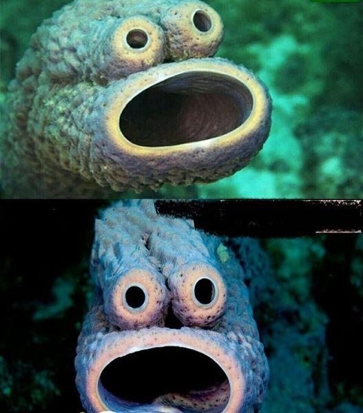 ماهی که به دلیل شکل صورتش معروف شد+عکس