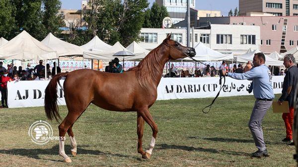 گزارش تصویری جشنواره اسبهای اصیل عرب در اردبیل