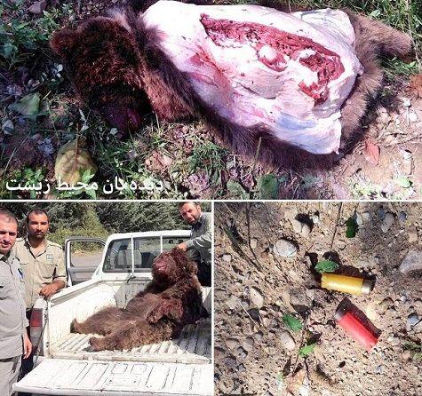 دستگیری چند نفر در حال تکه کردن این خرس برای کباب!+عکس