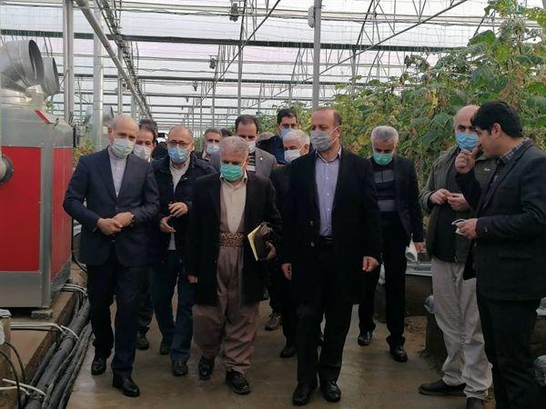 بازدید مدیرعامل بانک کشاورزی از گلخانه هیدروپونیک مشارکتی بانک کشاورزی در بوکان