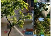 برگزاری دوره های آموزشی مجازی گل و گیاه ویژه شهروندان شمال شرق تهران