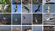 عرضه پرندگان در بازار فریدونکنار غیرقانونی است