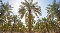 تمایل چین برای فاینانس ۱.۷ میلیارد دلاری در دشتهای خوزستان و ایلام