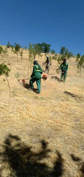 محافظت عرصه های جنگلی منطقه 4 از آتش سوزی های احتمالی