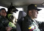 سگی که جانش ۷۰ هزار دلار ارزش دارد!+ عکس