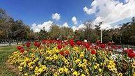 کاشت 50 هزار پیاز لاله در بوستان ملت در آستانه بهار