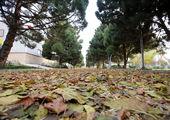 عملیات کاشت 100 اصله درخت روت بال در منطقه 3 تهران
