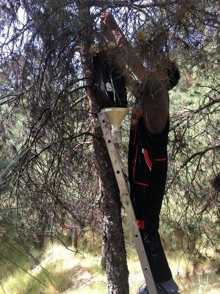 تمهیدات تابستانه منطقه 4 برای محافظت از درختان بوستان های جنگلی
