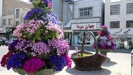 چشم نوازی گل های بهاری در منطقه ۱۳