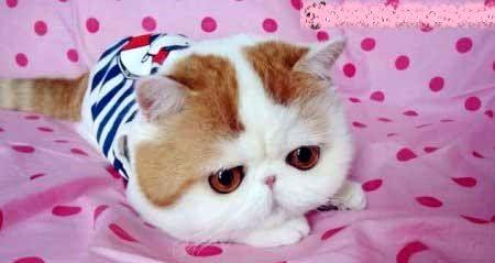 دلسوزی «نگین صدق گویا» برای بچه گربه ها+عکس