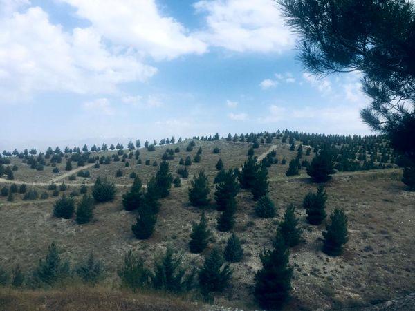 اجرای آتش برها در اراضی جنگلکاری منطقه۱۳