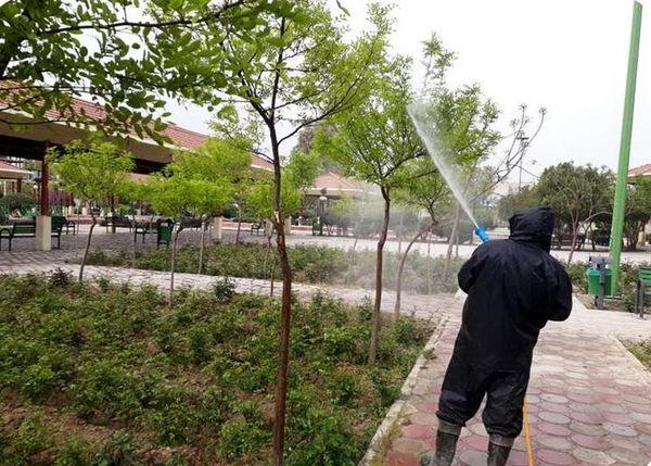 کاهش چشمگیر درختان رو به زوال در مرکز شهر تهران