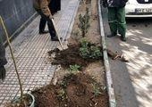 تهران ۱۴۰۰ هویت را به شمیران باز خواهد گرداند