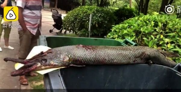 حمله ماهی غول پیکر درنده به کودک خردسال در پارک! +عکس