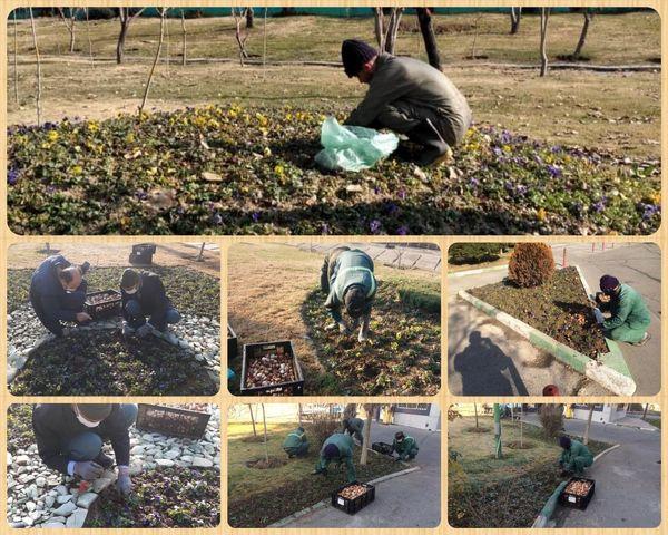 آغاز کاشت 32 هزار پیاز لاله در منطقه 15