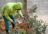 آبشویی بیش از 24 هزار اصله درخت در شمال شرق پایتخت