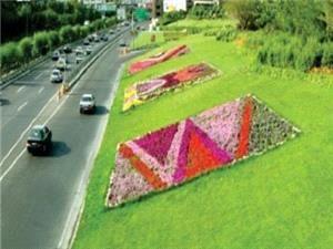 9124 متر مربع فرش گل در حاشیه بزرگراه های منطقه سه گسترده شد