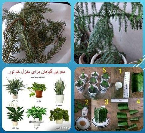 برپایی دوره های آموزشی مجازی نگهداری  گیاهان در منطقه 15