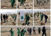 طرح کلبه جنگلی  در میدان تجریش اجرا شد