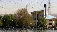 پرنده نگاری در بوستان آزادگان