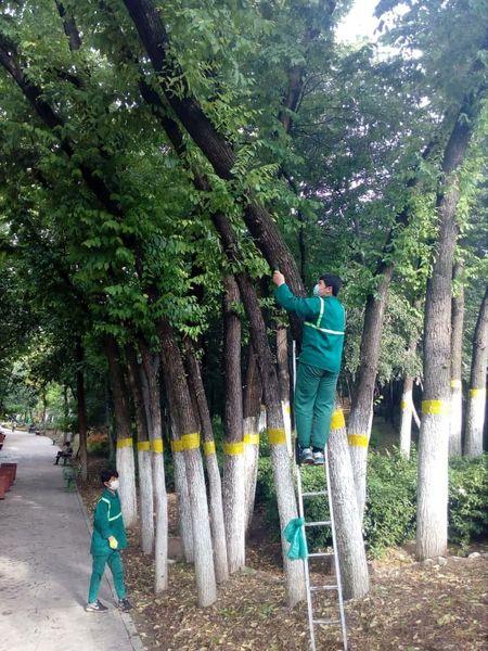 آفت درختان نارون در شمال تهران کنترل شد